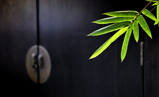 Bambus_5_540