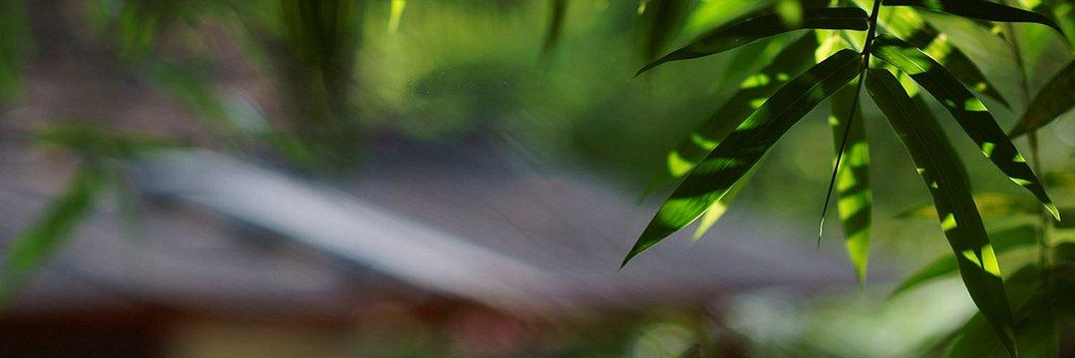 Bambus_miljø_8_1200