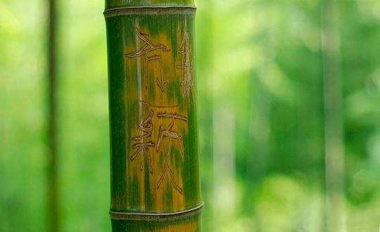 Bambus_7_540