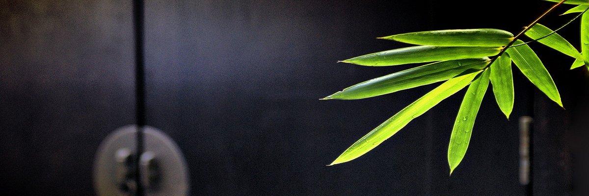 Bambus_miljø_1_1200