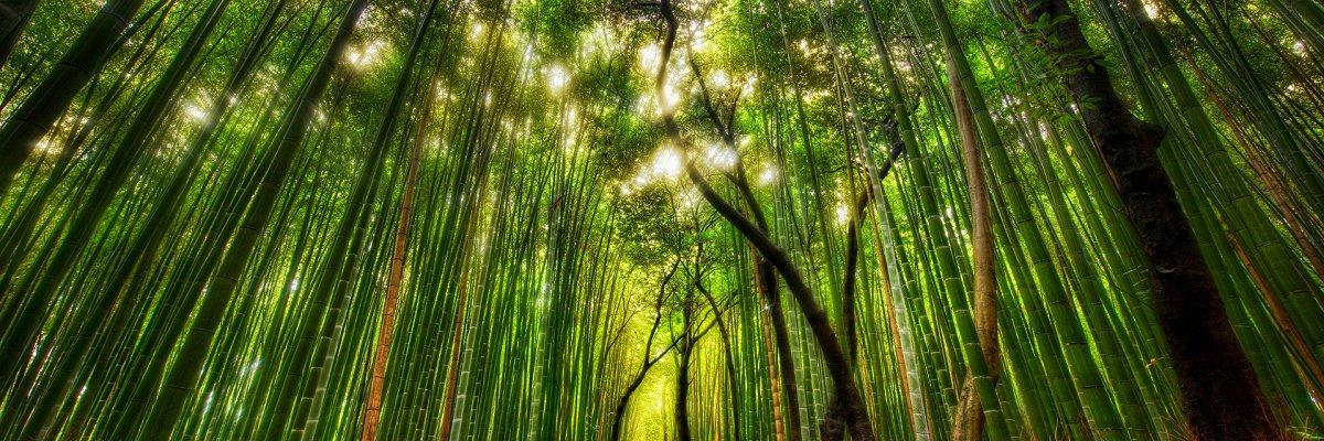 Bambus_miljø_4_1200