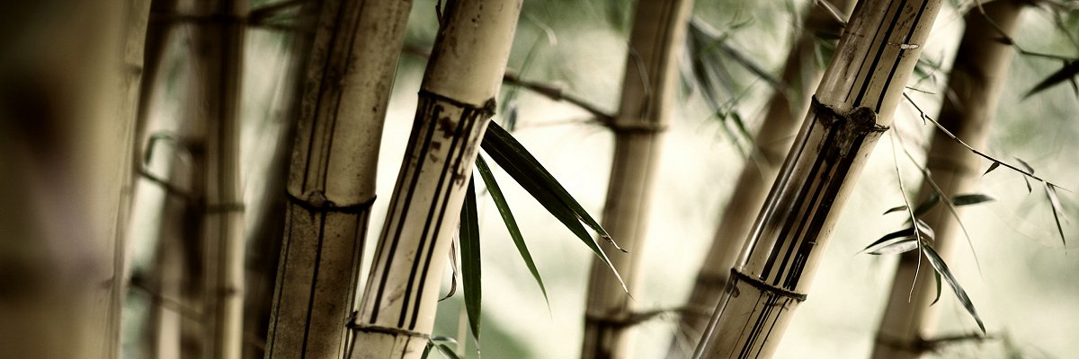 Bambus_miljø_6_1200