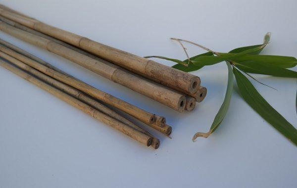 Bambusstokke_natur_1_540