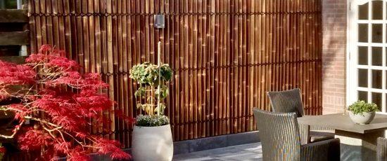 bambus-halve-sorte-bambus.jpg